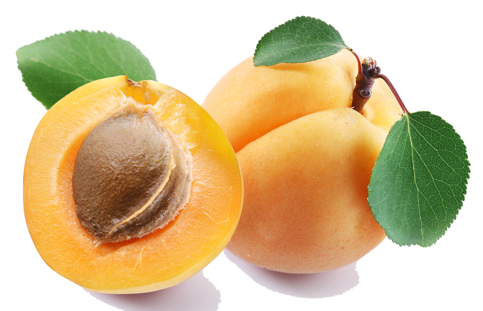 Apricot Clipart PNG Image