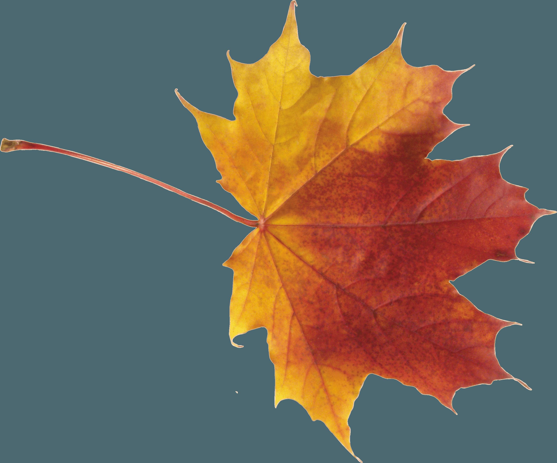 Download Autumn Png Leaf HQ PNG Image | FreePNGImg