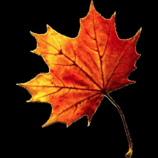 Download Free Fall Autumn Leaves Transparent Icon Favicon Freepngimg