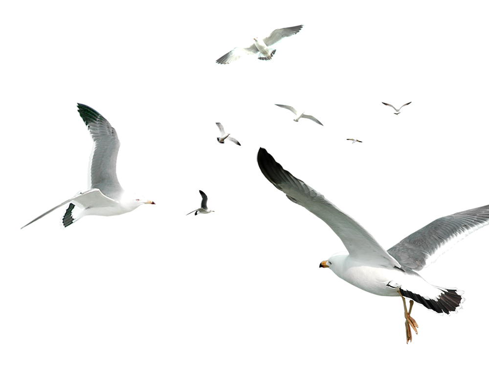 Decorative Flocks Pattern Flying Gulls Simple Seagull PNG Image