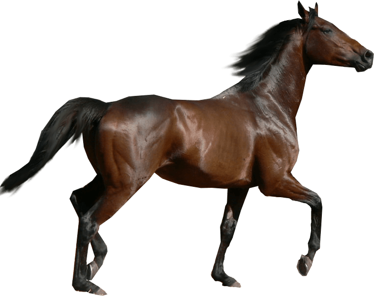 Download Horse Png Image Download Picture Transparent ...