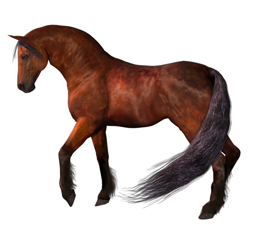 Horse Png 2 PNG Image