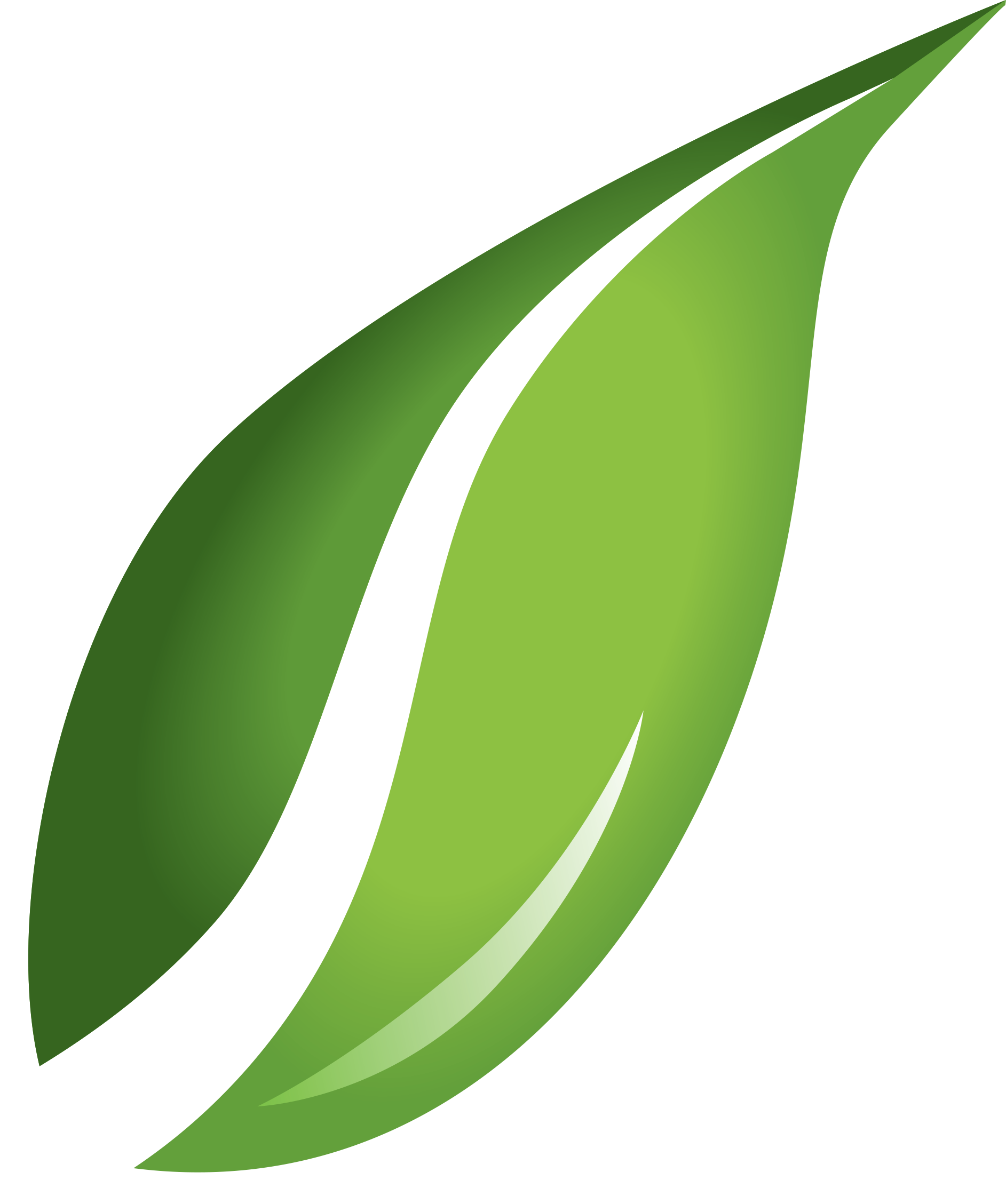 Leaf Transparent Background PNG Image