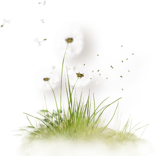 Colored Dandelion Download HQ PNG PNG Image