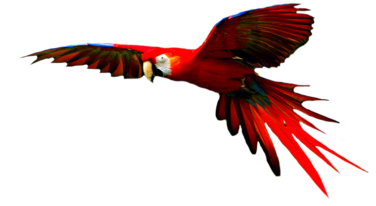Macaw High-Quality Png PNG Image