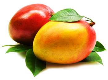 Mango Png Clipart PNG Image