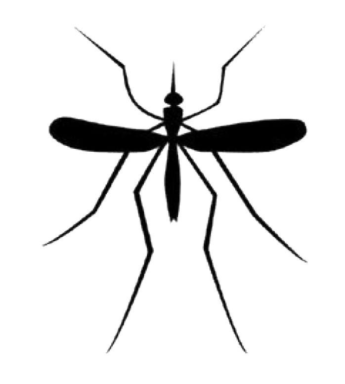 Mosquito Download Png PNG Image