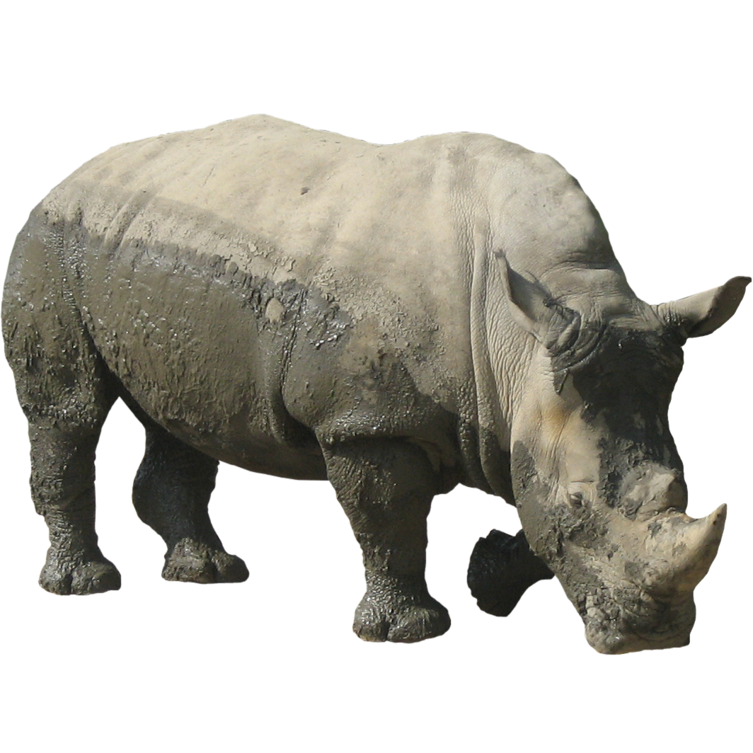 Rhinoceros Free Download Png PNG Image