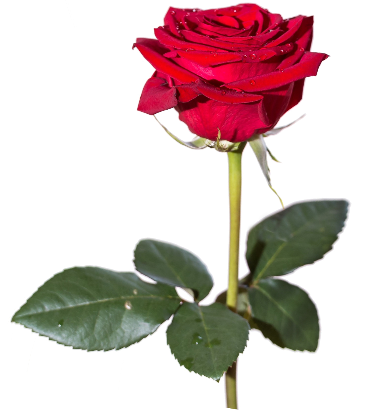 Download Red Rose Hd HQ PNG Image