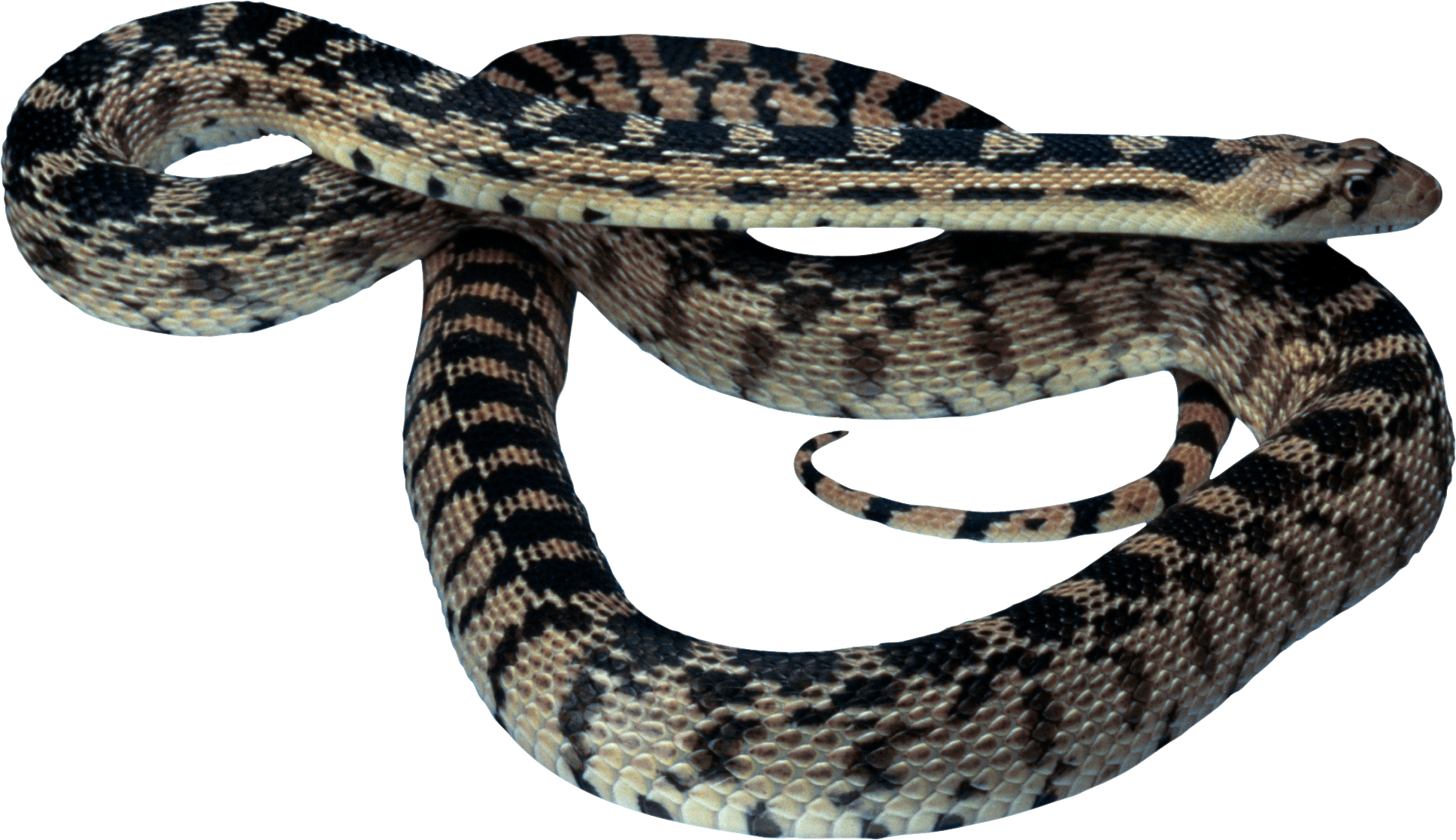 Snake Png Image Picture Download  PNG Image