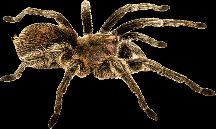 Download Spider Png Image HQ PNG Image | FreePNGImg