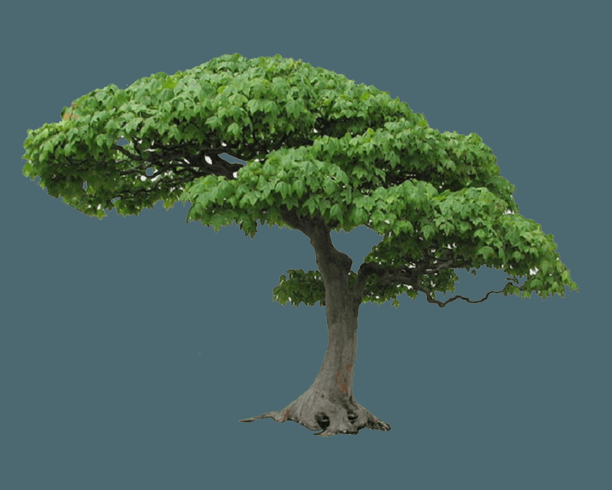 Banyan Tree Paint Color