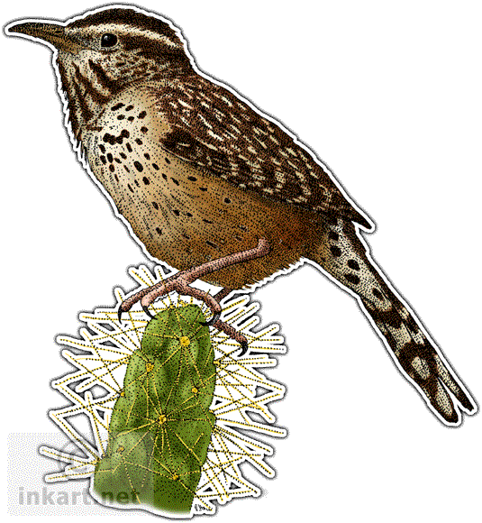Wren Png PNG Image