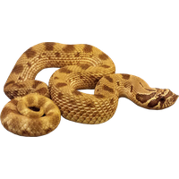 Snake Png Image Picture Download <B>素材格式</B>: PNG<B>素材尺寸</B>: 600x388<B>檔案大小</B>: 53.5KB<B>推薦人數</B>: 1,125