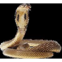 Tiger Png Image Download Tigers<B>素材格式</B>: PNG<B>素材尺寸</B>: 680x1175<B>檔案大小</B>: 262.6KB<B>推薦人數</B>: 6,512