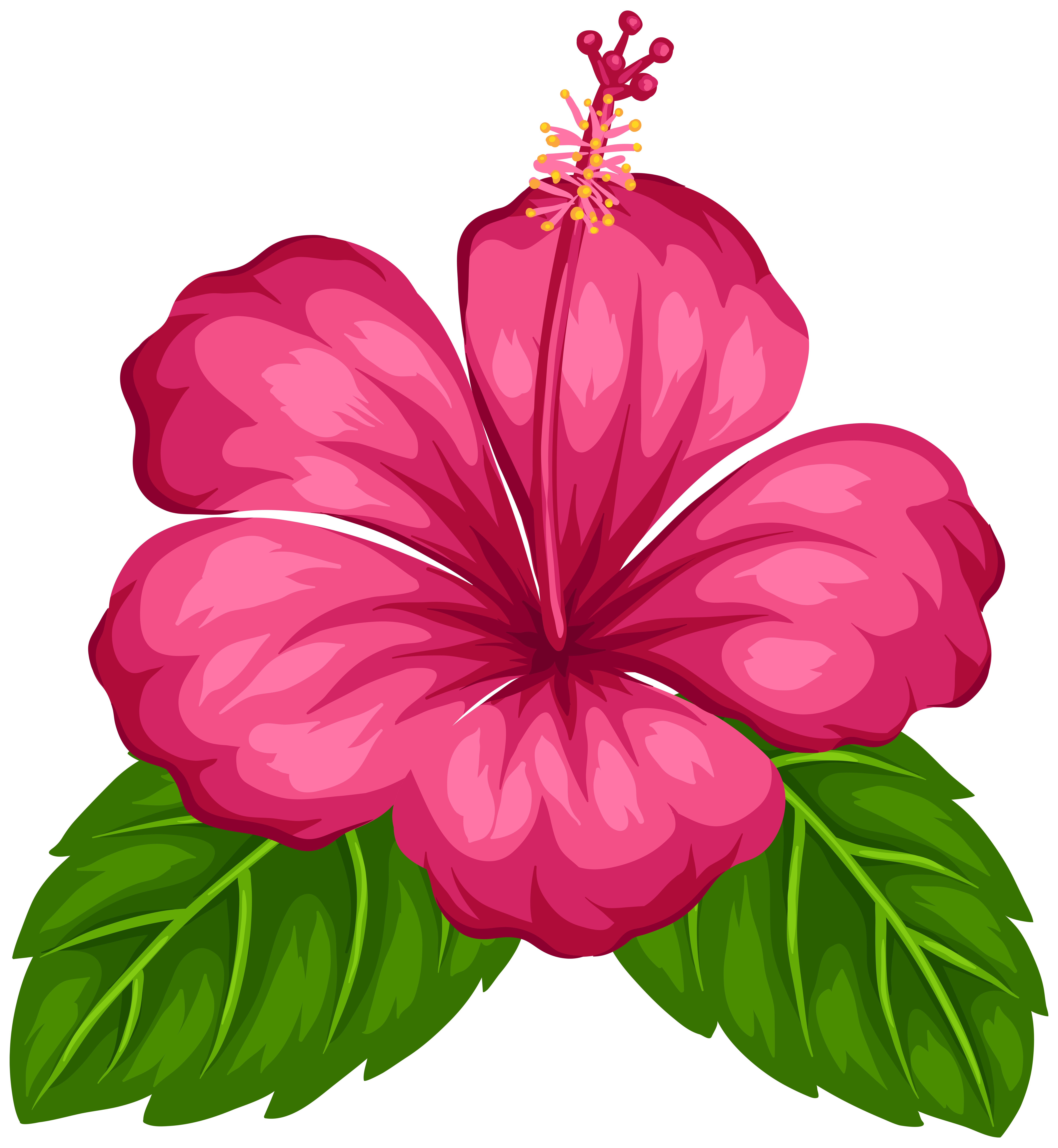 Good Greeting Morning Tropical Flower Android PNG Image
