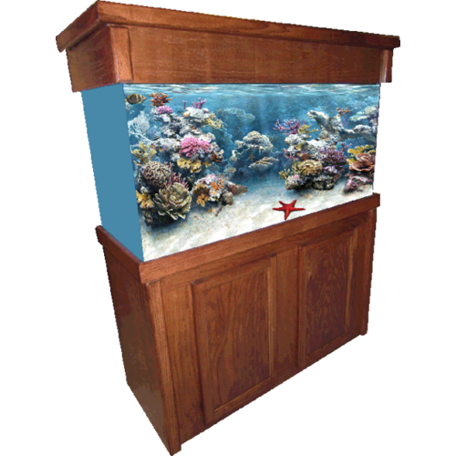 Aquarium Furniture Image PNG Free Photo PNG Image