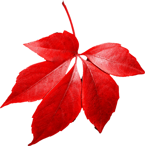 Red Autumn Png Leaf PNG Image