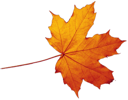 Transparent Autumn Leaves Falling PNG Image