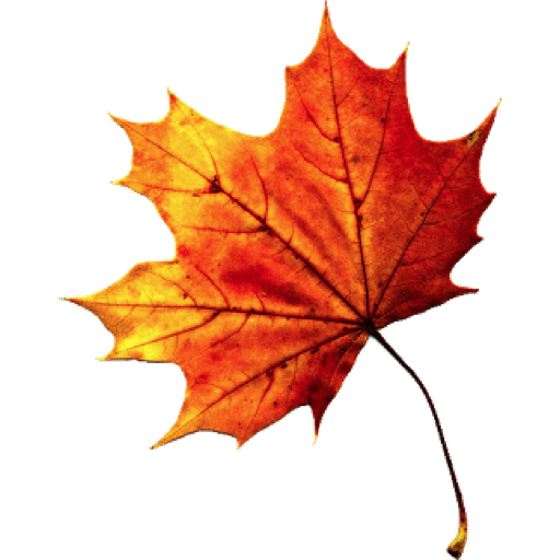 Download Fall Autumn Leaves Transparent HQ PNG Image ...