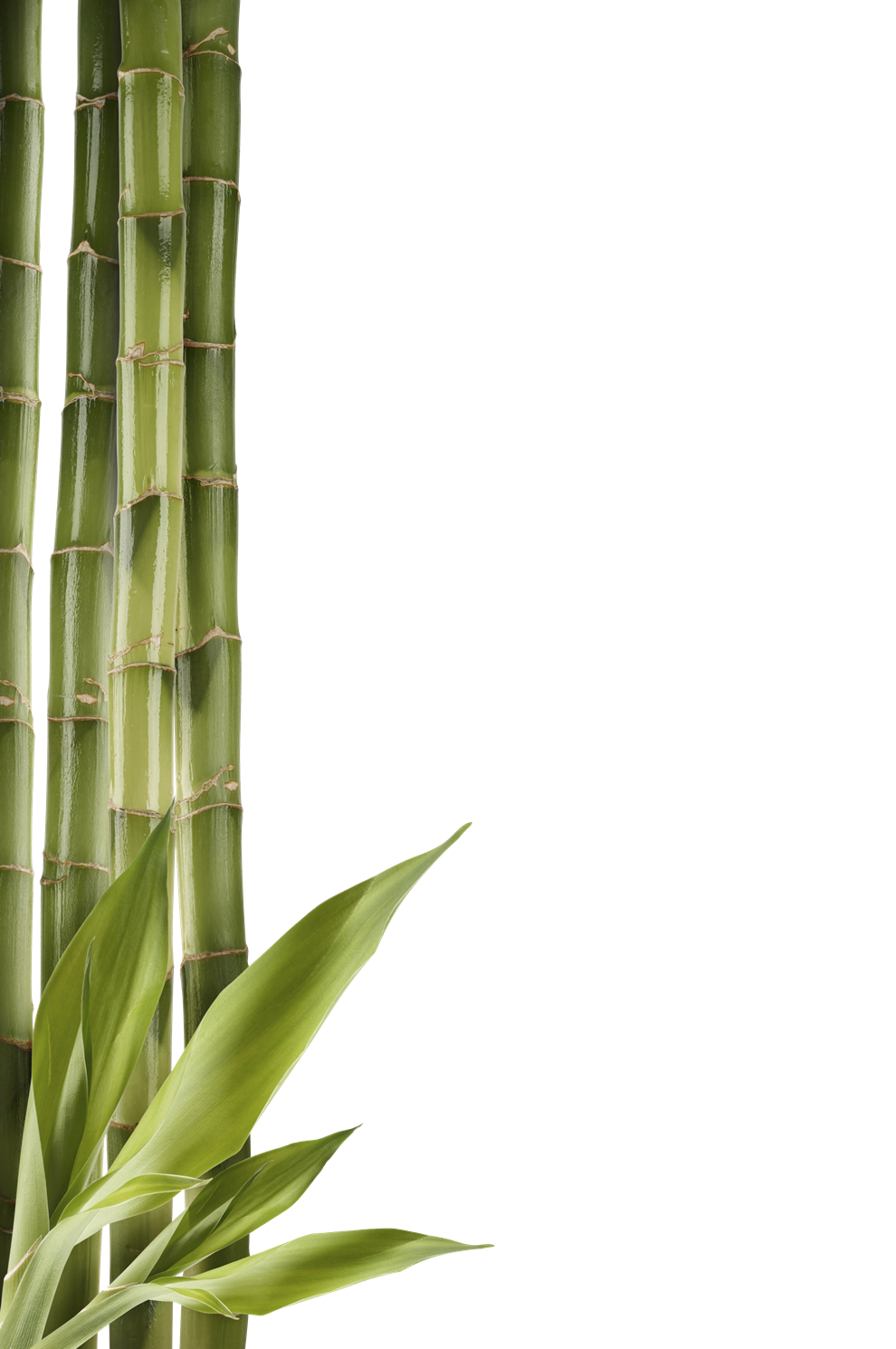 Bamboo Clipart PNG Image