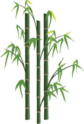 Bamboo Png Picture PNG Image