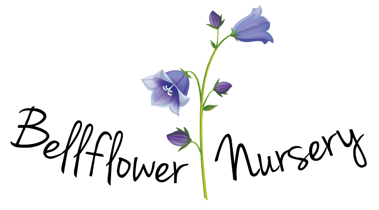 Bellflower Free Download Png PNG Image