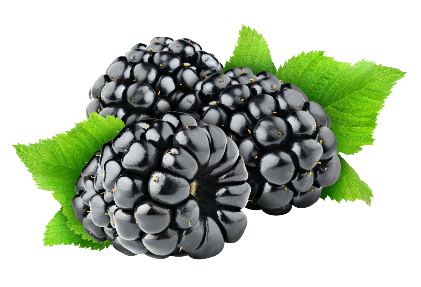 Blackberry Fruit Free Png Image PNG Image