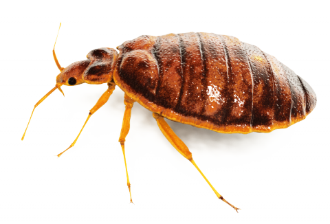 Bed Bug Spray PNG Image