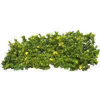 Download Bush Free Png Photo Images And Clipart Freepngimg