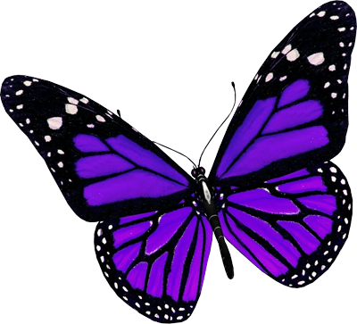 Purple Butterfly Png Image PNG Image