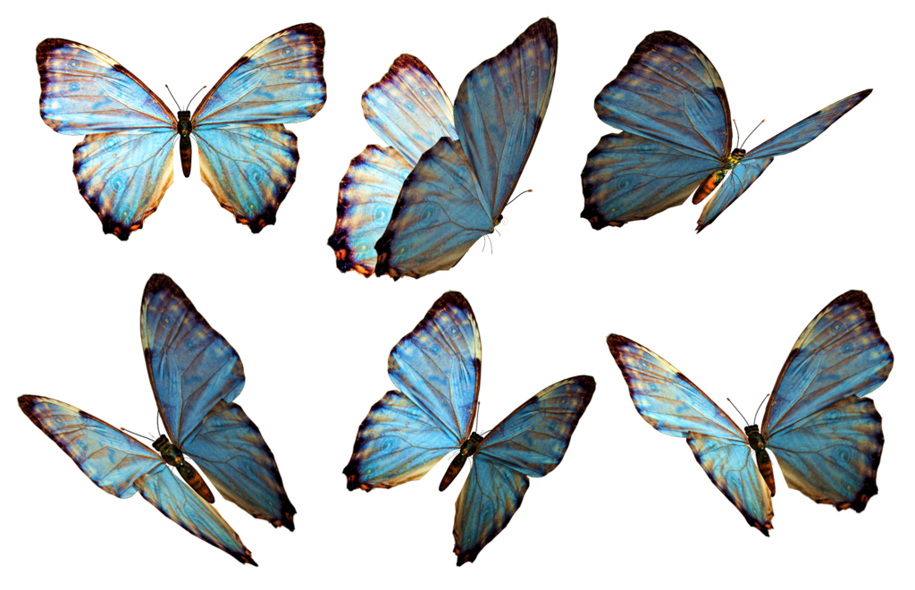 Butterfly Png 2 PNG Image