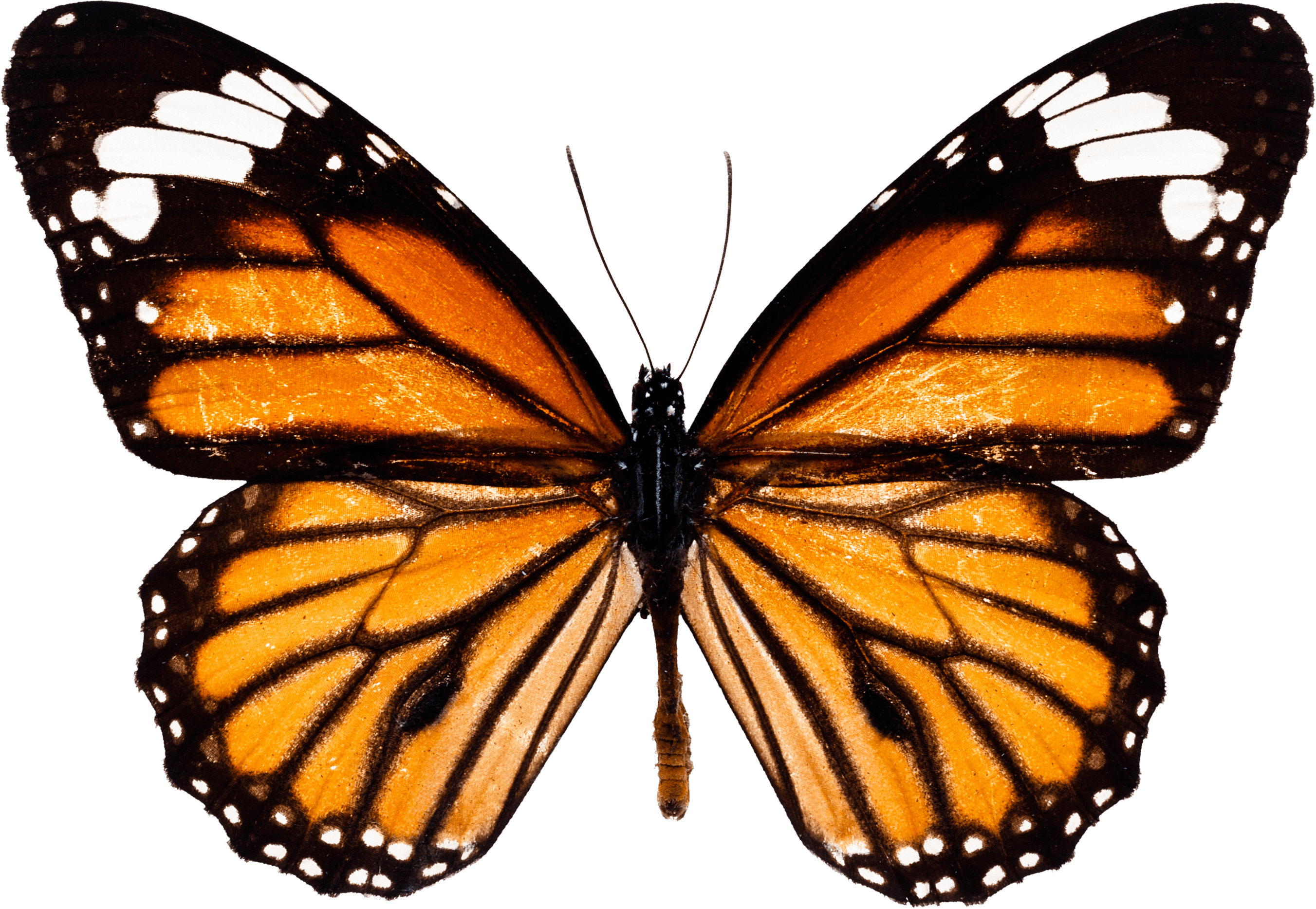 Download Butterfly Png Image HQ PNG Image | FreePNGImg