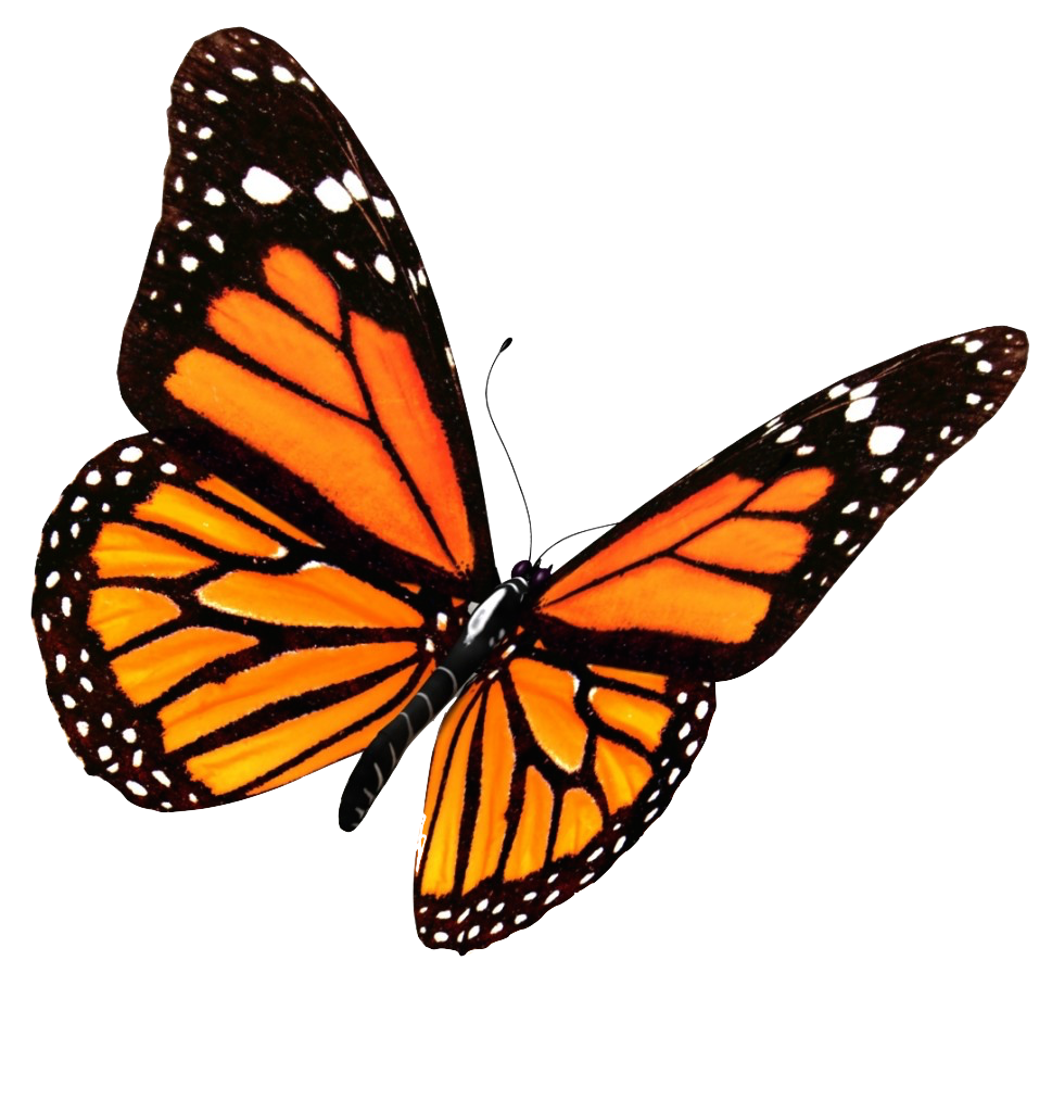 Flying Butterflies Transparent Image PNG Image