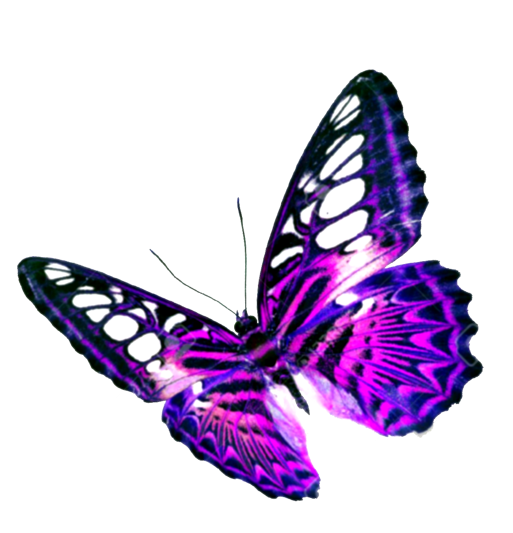 Purple Butterfly Transparent Background PNG Image