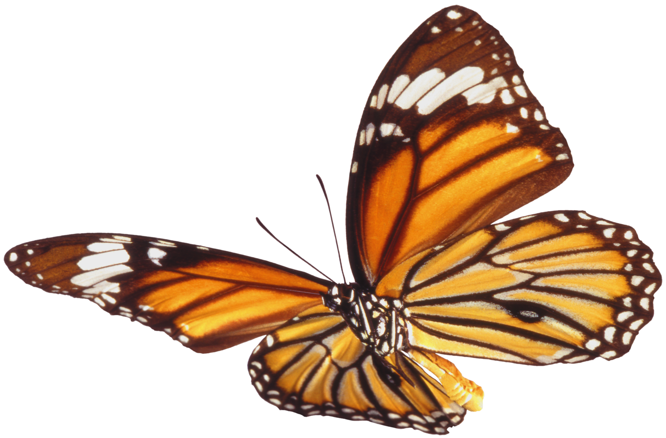 Butterfly Png 7 PNG Image