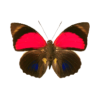 Download Butterfly Free PNG photo images and clipart | FreePNGImg