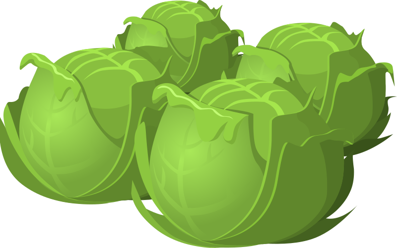 Cartoon Cabbage Food PNG Image