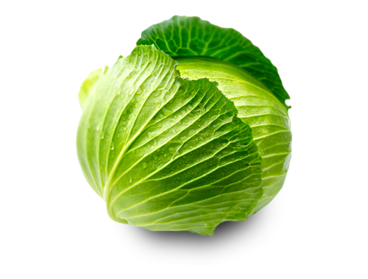 Cabbage Png Clipart PNG Image