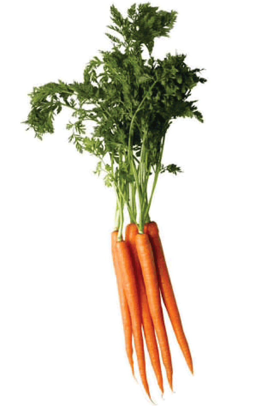Carrot Png Image PNG Image