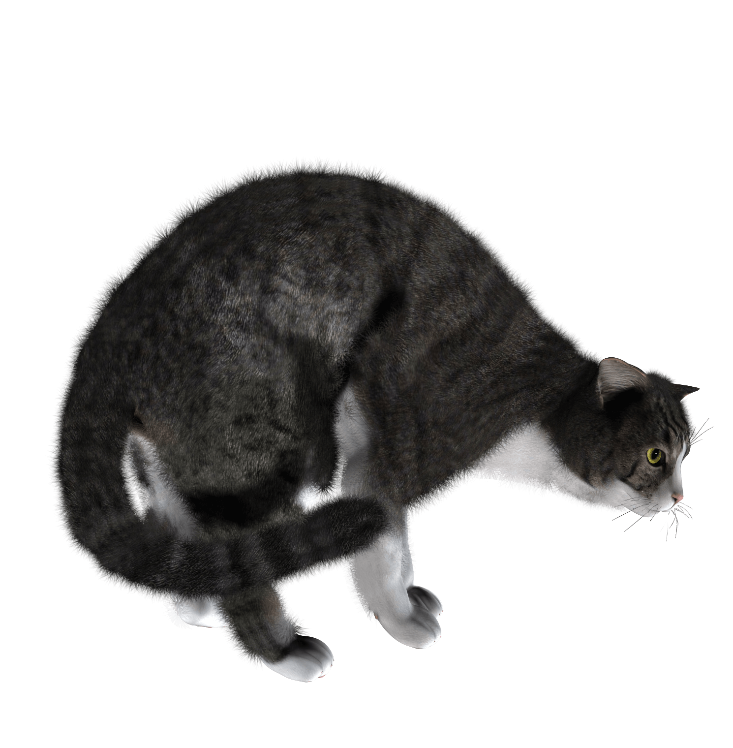 Cat Png Image PNG Image