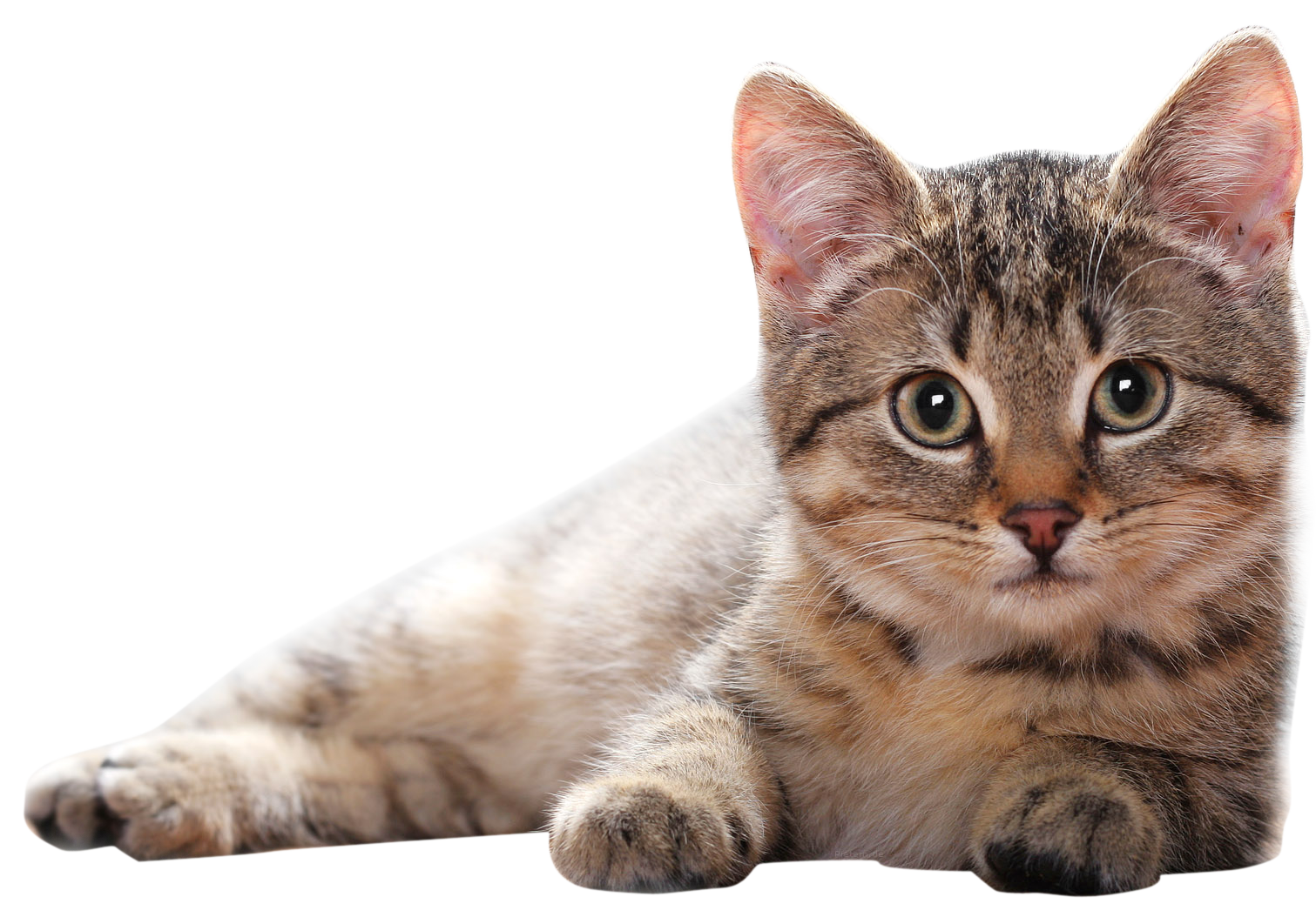 Cat Clipart PNG Image