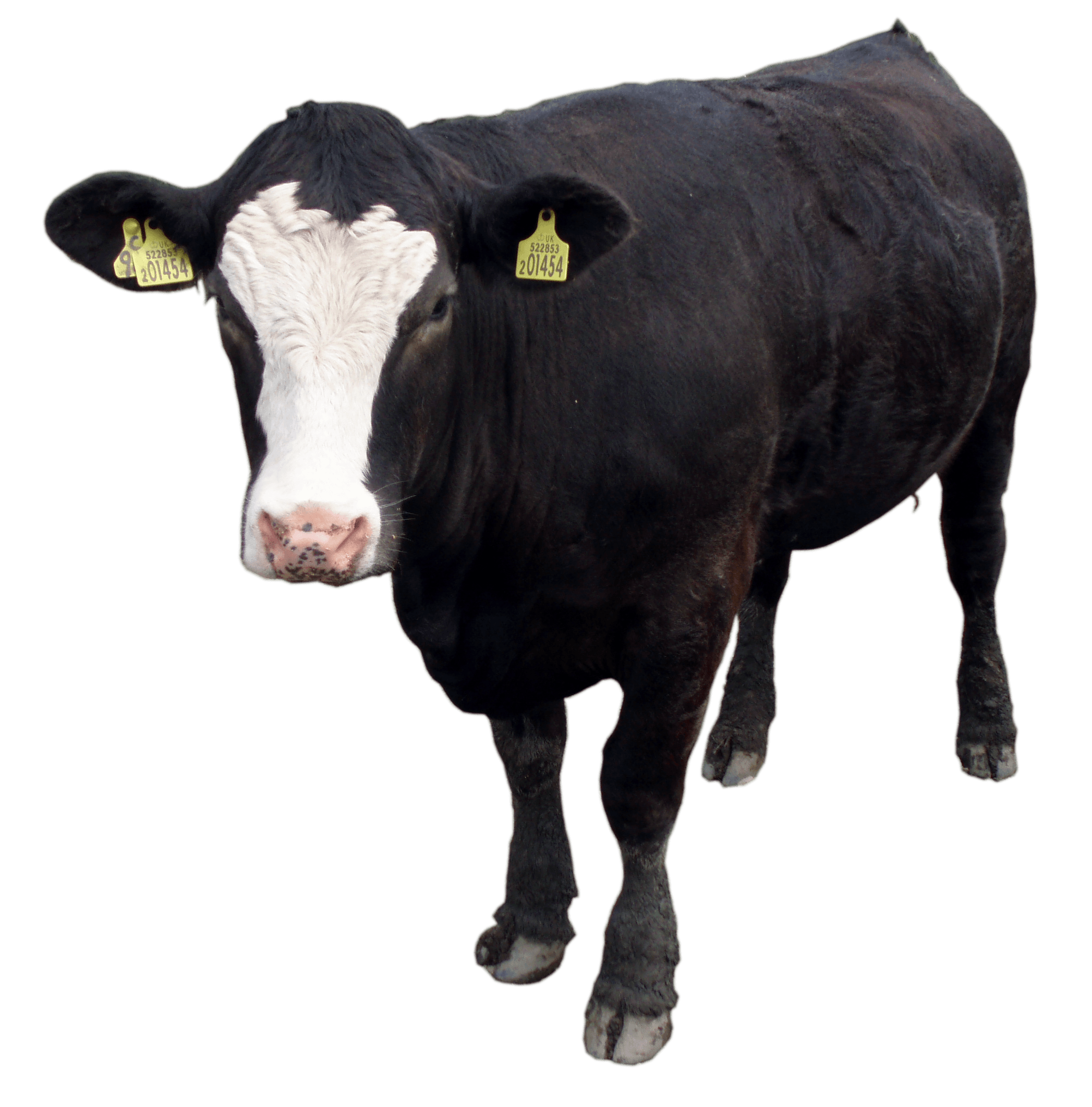 Black Cow Png Image Download Picture PNG Image