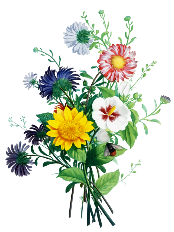 Bouquet Bride Plant Flower Chrysanths Free Transparent Image HQ PNG Image