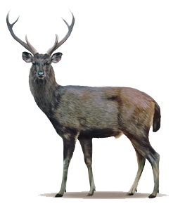 Deer High-Quality Png PNG Image