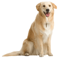 download dog free png photo images and clipart freepngimg