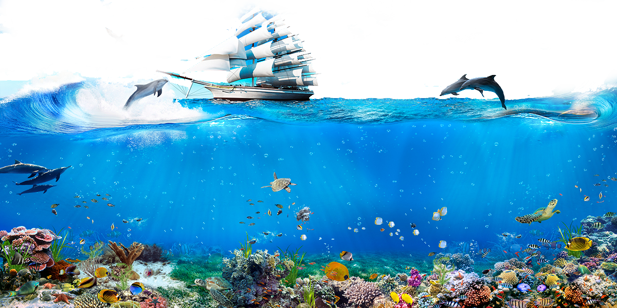 Underwater Wallpaper Sailing Singapore Dolphin World Android PNG Image