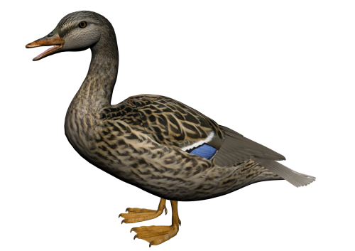 Duck Png 8 PNG Image