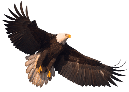 Eagle Png Image With Transparency Download PNG Image