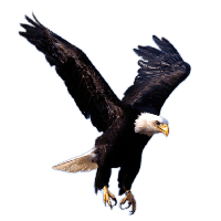 download eagle free png photo images and clipart freepngimg